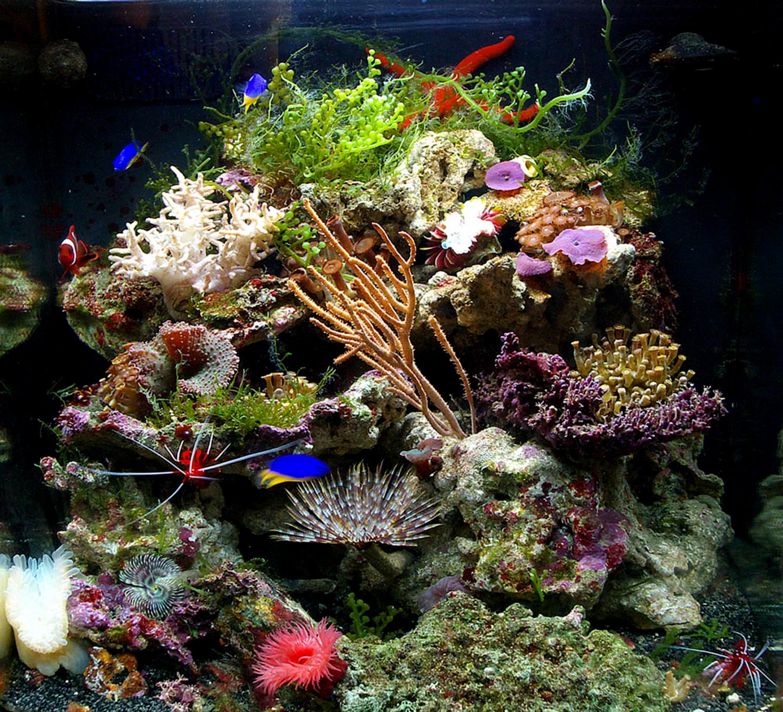 Коралловый риф - в 60 литрах