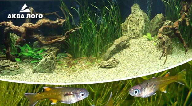 Пресноводное оформление с живыми растениями в панорамном аквариуме. Архив. 2008год.
