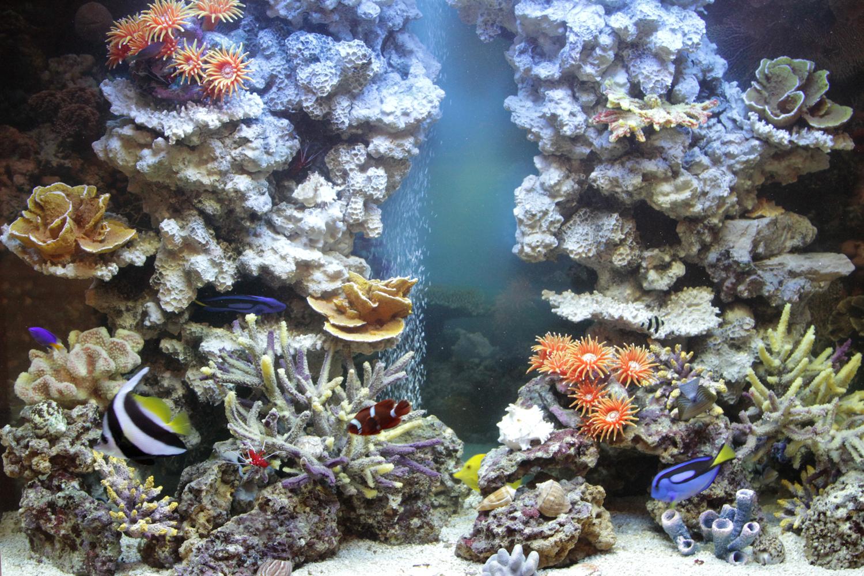 Морское оформление «Рыбное море»