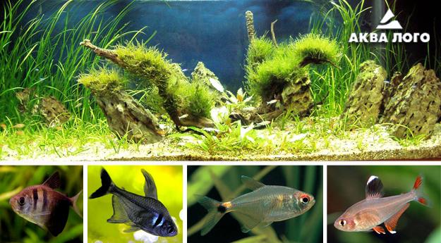 Пресноводное оформление с живыми растениями и стайными рыбами. Архив. 2007год.