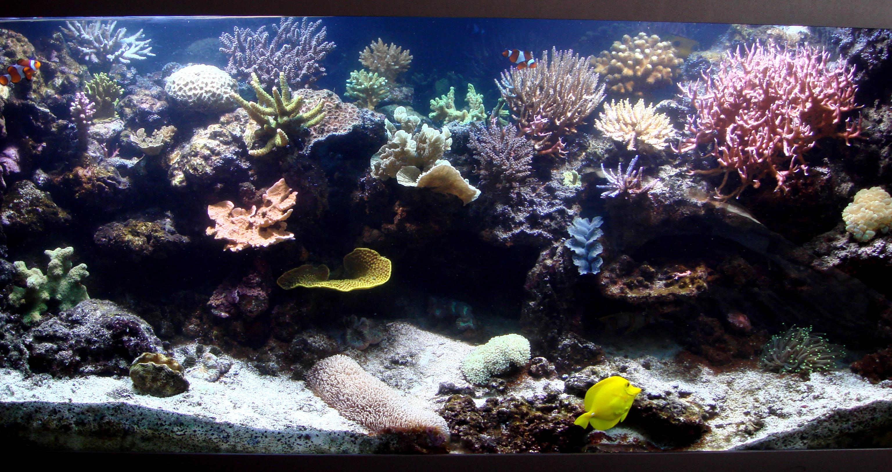 Морское оформление «Риф с жесткими кораллами». Архив. 2007 год.