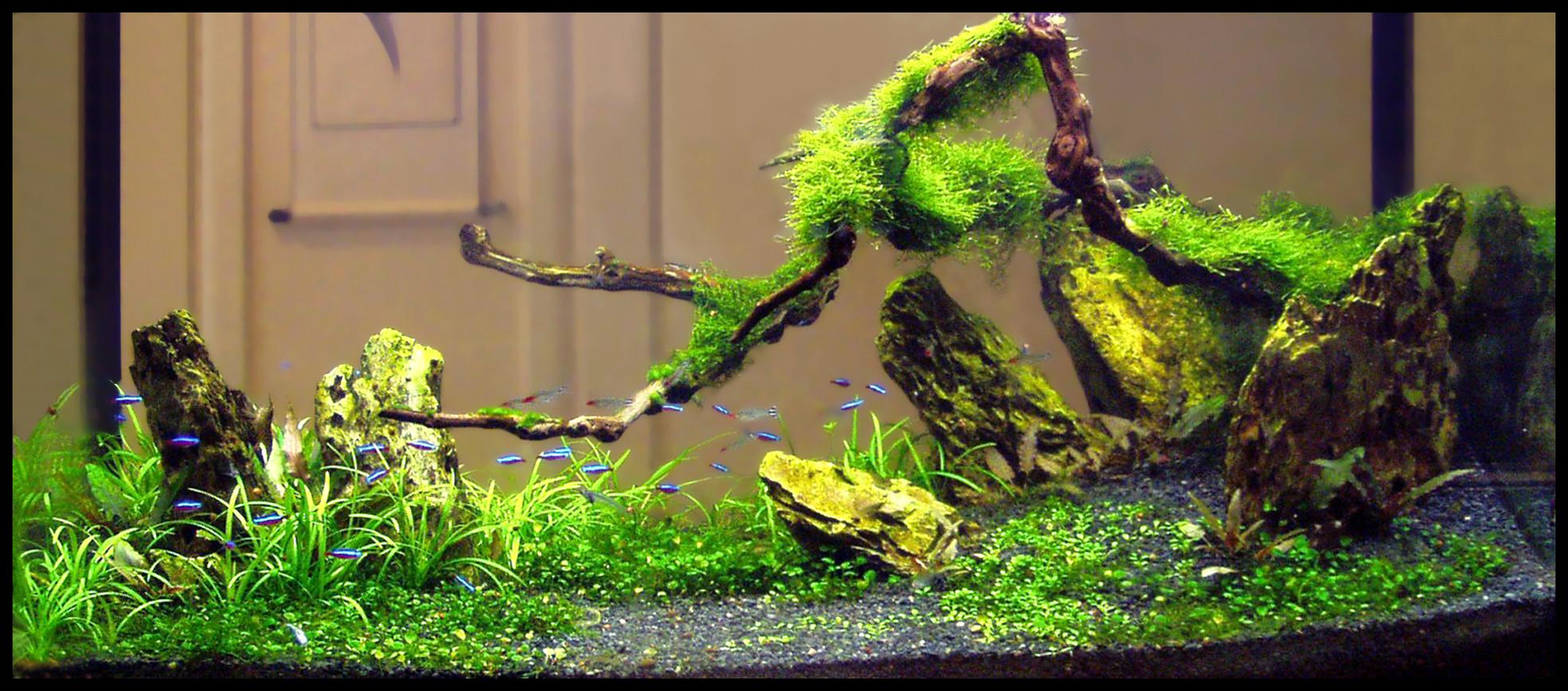 Пресноводное оформление с живыми растениями в аквариуме не просвет. Архив. 2007год.