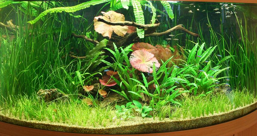Пресноводное оформление с живыми растениями в угловом аквариуме. Архив. 2009год.
