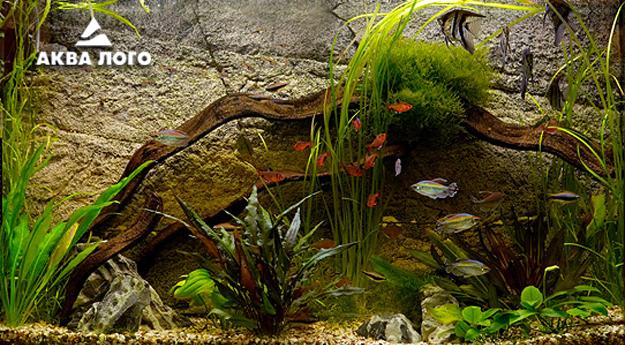 Пресноводное оформление с живыми растениями каменный фон Архив. 2007год.