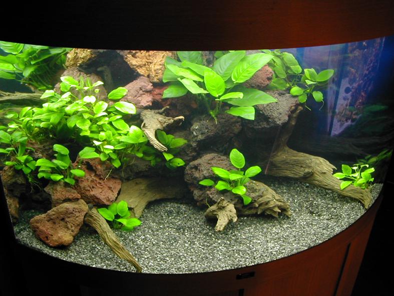 Пресноводное оформление с живыми растениями в угловом аквариуме Архив. 2003год.