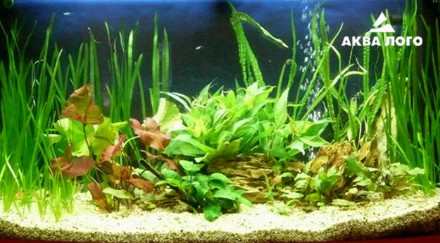 Пресноводное оформление с живыми растениями в панорамном аквариуме. Архив. 2010год.
