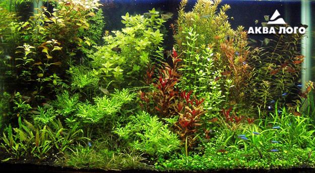 Пресноводное оформление с живыми растениями