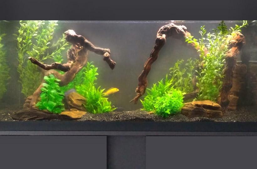 Пресноводный аквариум с искусственными растениями и цихловыми