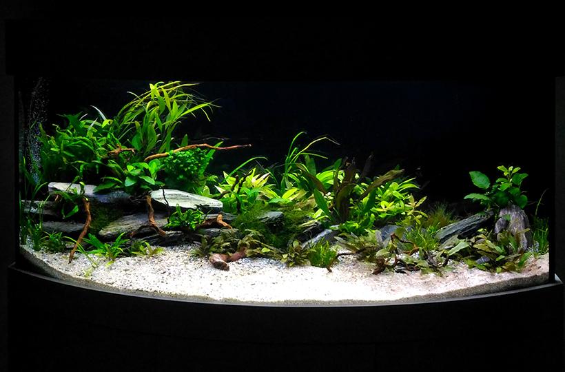 Пресноводный аквариум с живыми растениями объемом 470 литров