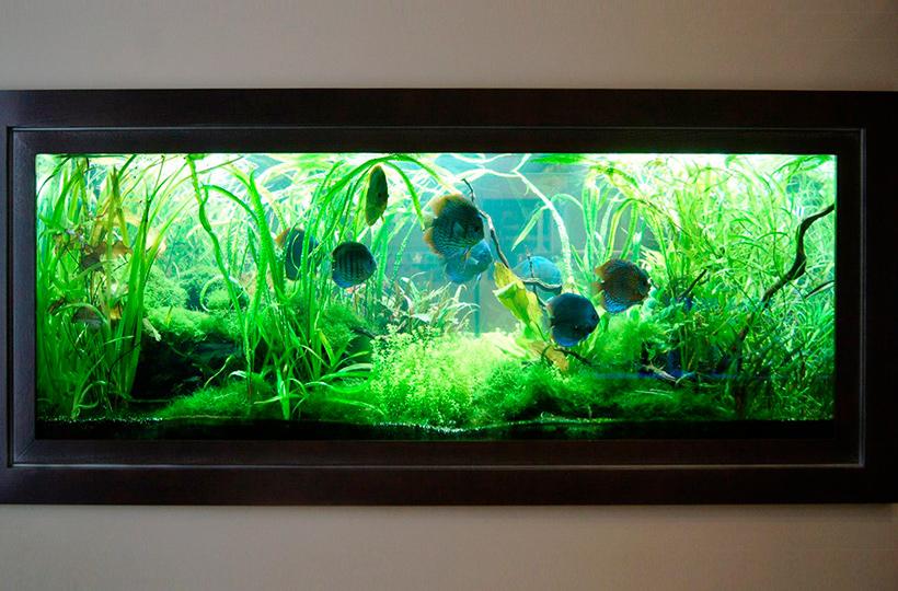 Пресноводное оформление с дискусами во встроенном аквариуме