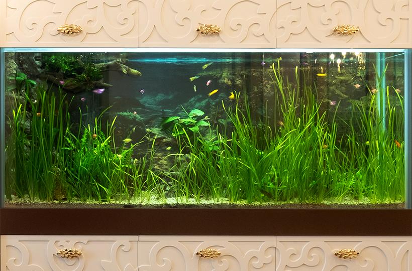 Пресноводное оформление с живыми растениями и Glo-fish