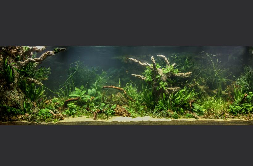 Пресноводное оформление - Голландия во встроенном аквариуме