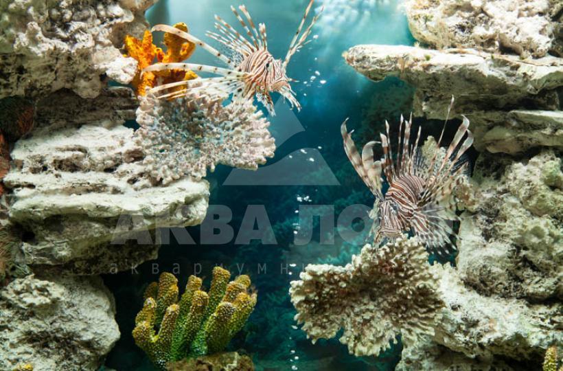 Морское оформление в аквариуме-иллюминаторе в Салоне на Соколе