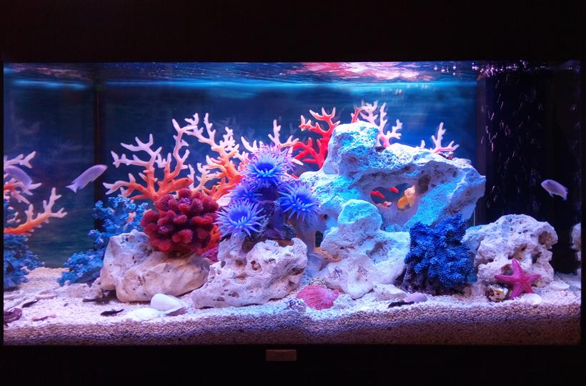Пресноводное оформление - Псевдоморе в аквариуме объемом 125 литров