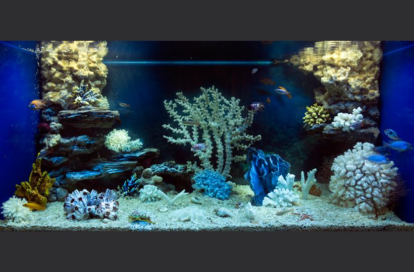 Пресноводное оформление - Псевдоморе во встроенном аквариуме