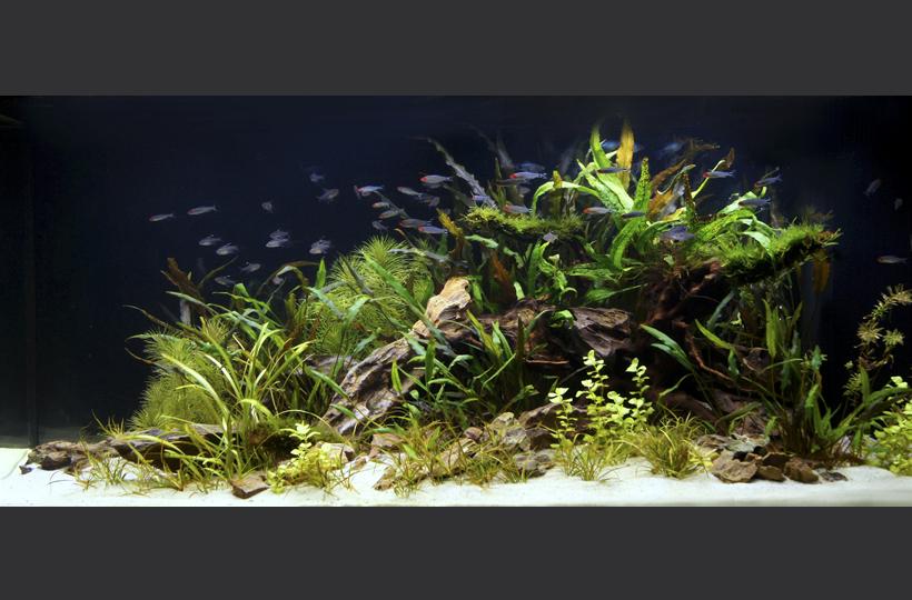Пресноводное оформление с живыми растениями и родостомусами