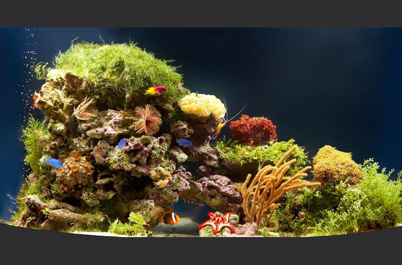 Морской риф с беспозвоночными