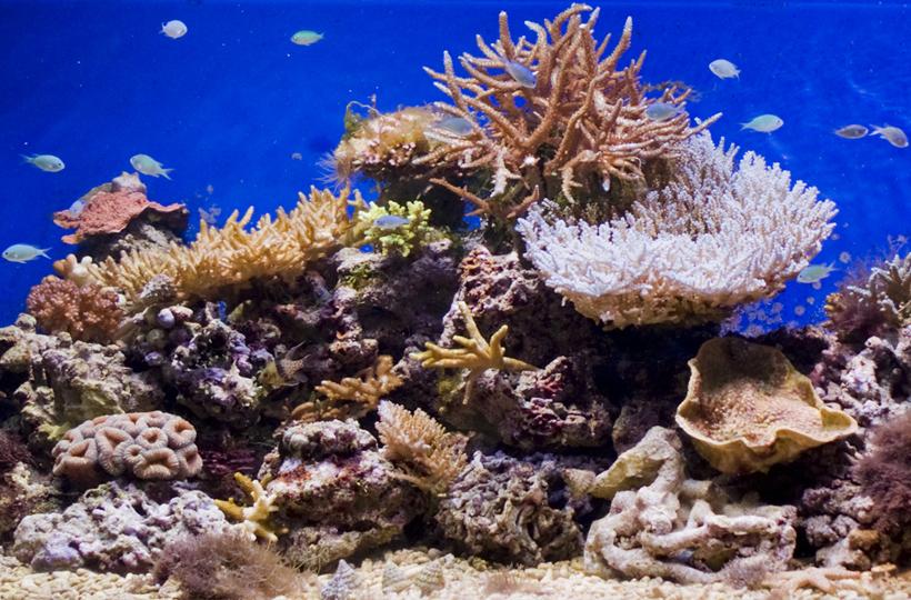 Рифовое оформление с жесткими кораллами