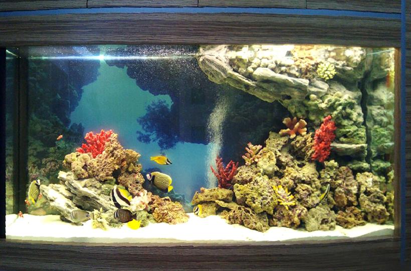 Морское оформление «Рыбное море» в аквариуме 1100 литров