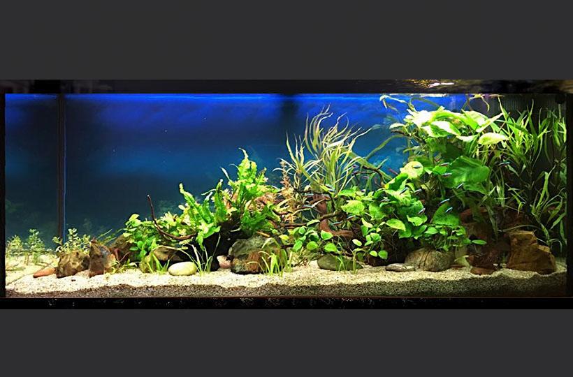 Пресноводное оформление с живыми растениями и неонами