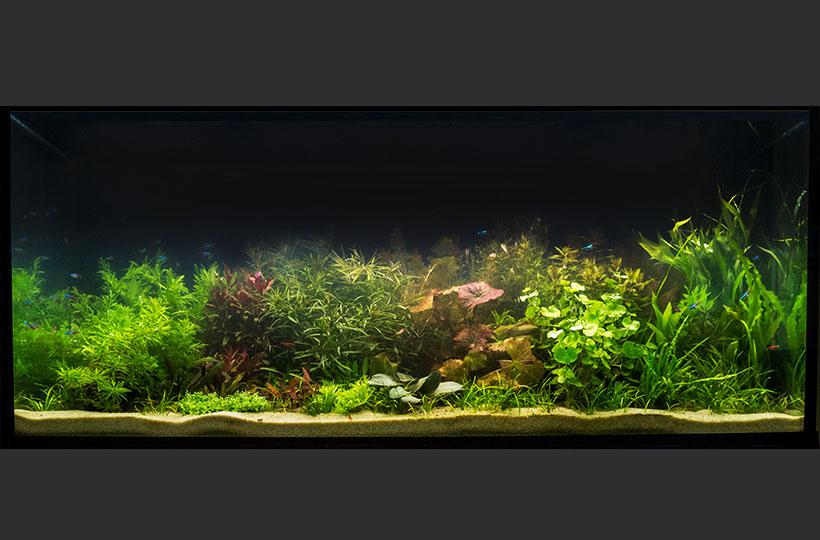 Пресноводное оформление с живыми растениями в стиле